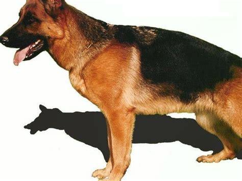 hombre perro se desata hombre perro 2 edition books hombre perdido se come a su perro taringa
