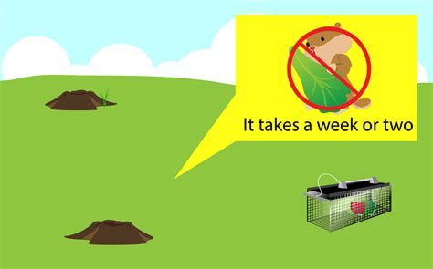how to get rid of a groundhog in my backyard how to get rid of groundhogs 14 steps with pictures wikihow
