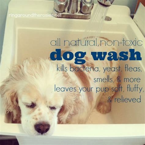 flea bath for dogs 24 best images about for my on for dogs lavender and pets