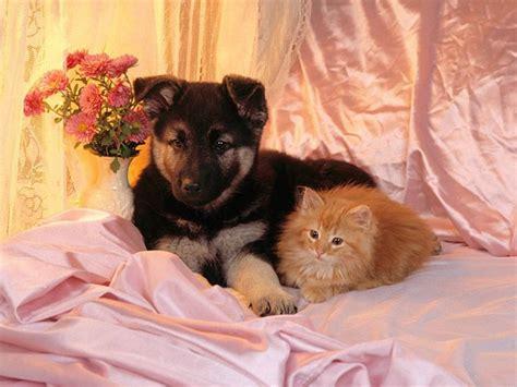 wallpaper cat dog dog and cat wallpaper