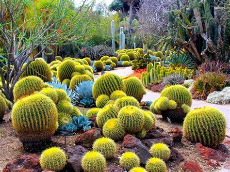 facts about succulents cactus facts world of succulents
