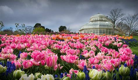 National Botanic Garden National Botanic Gardens Dublin Z Top Ten In Dublin Choose Ireland