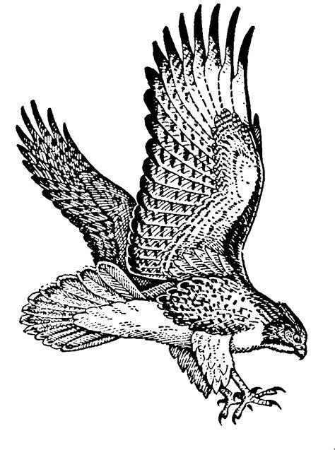 Hawk clip art clipart - Clipartix