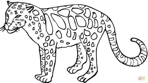 wild animals coloring pages preschool leopard 27 coloring page free printable coloring pages