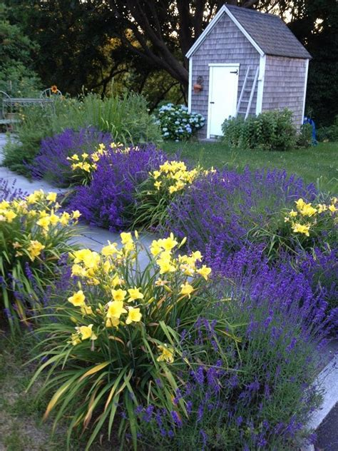 Lavender Garden Ideas Lavender And Daylilies Landscaping I Gardens Growing Lavender And Garden