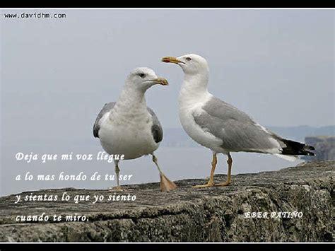Versos Cortos De Aves | poemas cortos