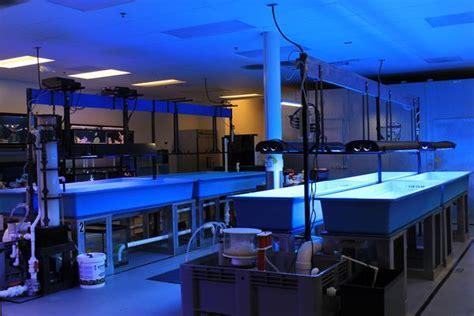 fish room raleigh thefishroom fishroom coral farm