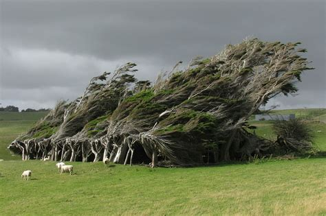 amazing tree 16 of the most magnificent trees in the world bored panda