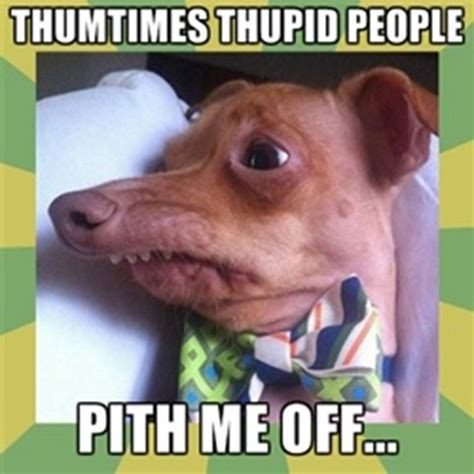 Stephen Dog Meme - 89 best lisp meme dog images on pinterest tuna dog