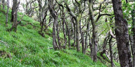 woodland tree woodlands and forests national parks uk