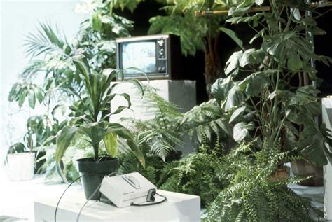 music to grow plants by 15 the wire magazine 339 zepelim