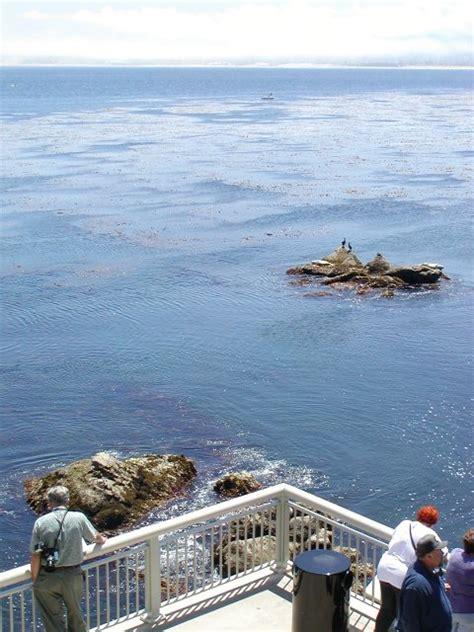 Monterey Mba by Monterey Bay Aquarium Rachael Edwards