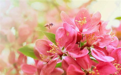wallpaper flower com most beautiful flower wallpapers world http refreshrose