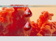 Founder Effect: Example & Definition - Video & Lesson ... Habitat Fragmentation Definition Biology