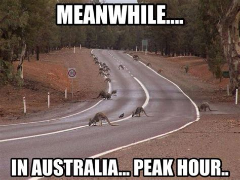 Australian Meme - 42 best images about meanwhile in australia on pinterest