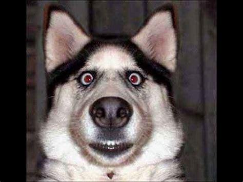 puppy fails funniest fails compilation hillarious dogs makemelaughs