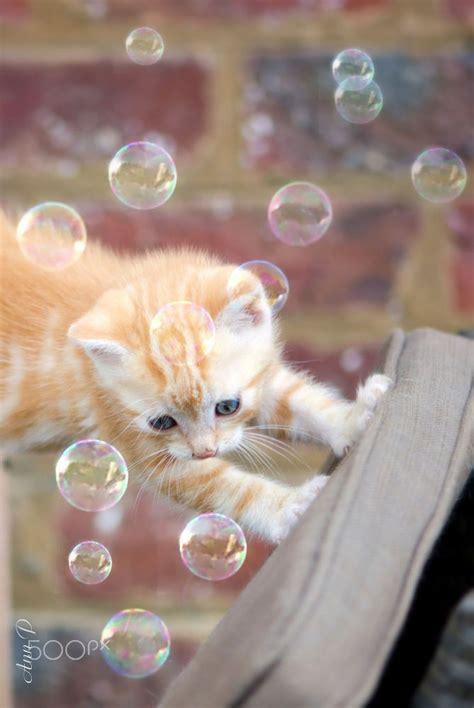 bobble kitten 243 best frank esque images on bohemian