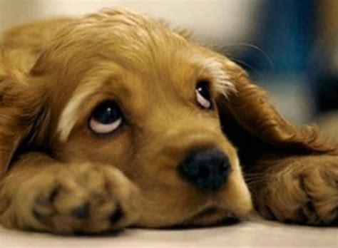 imagenes animales que reptan animales en adopci 243 n pasos para conseguir uno ella hoy