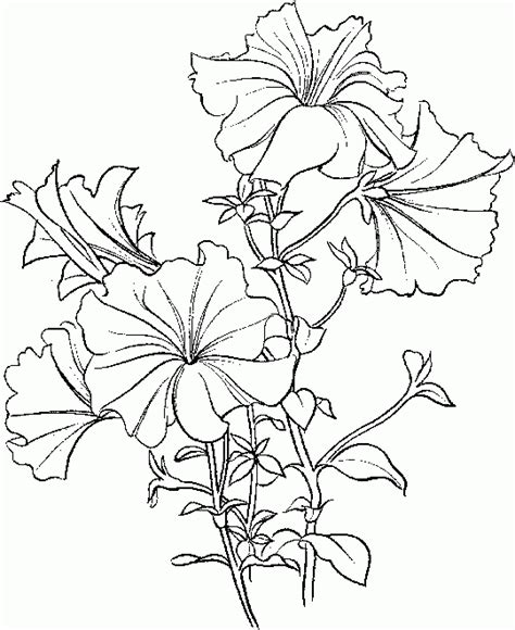 beautiful flower coloring pages coloring pages for kids