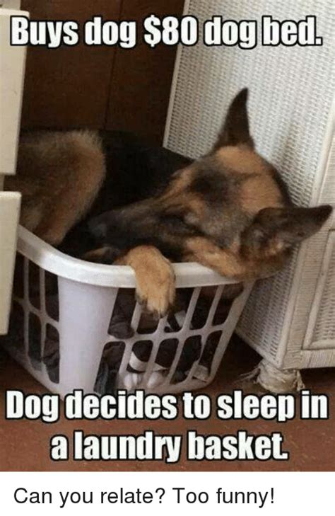 Dog In Bed Meme - buys dog 800 dog bed dogdecides to sleep in a laundry