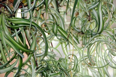 Pflanzen Die Kaum Licht Brauchen by Zimmerpflanzen Bei Wenig Licht Diese 5 Wachsen Im