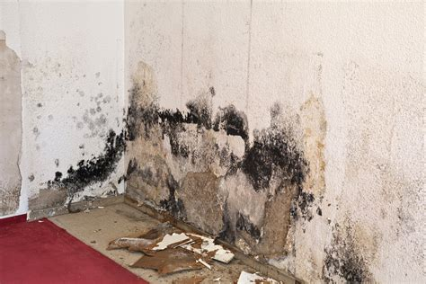 a simple guide to successful mold remediation am shield