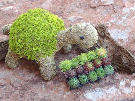 succulent turtle planter   adorable   show