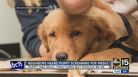 puppy screaming neighbors heard tempe puppy screaming for weeks