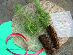 Tree Seedling Wedding Favors by Tree Seedlings Evergreen Memories Tree Seedlings And