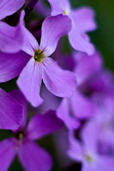 hues of purple the color purple on pinterest purple purple rain and