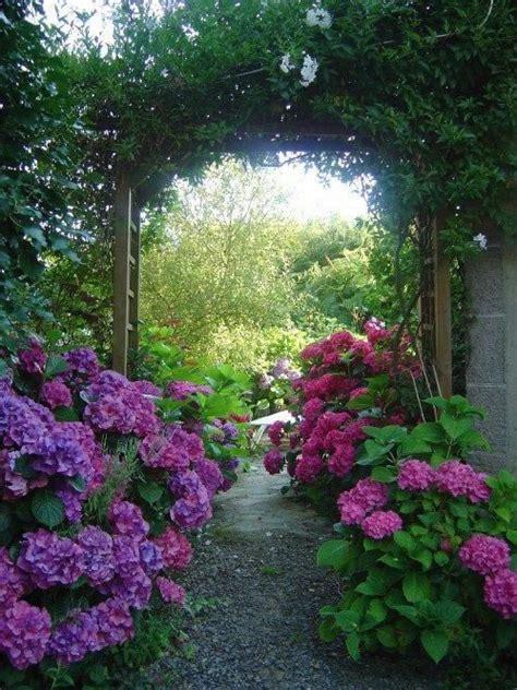 imagenes de jardines con hortensias la belleza de las hortensias en tu jard 237 n y hogar