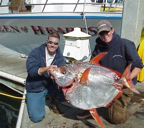 queen of hearts charter boat fishing queen of hearts sportfishing fishing report pillar point