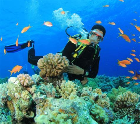 dive vacation top tips to prepare for your scuba diving vacation