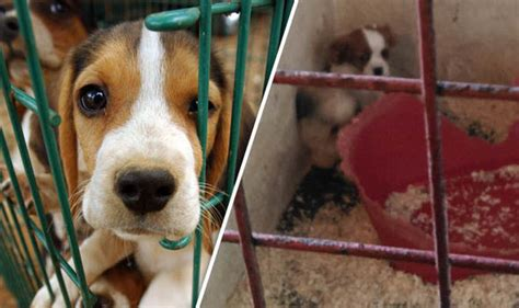 mps dogs victory in the battle to be a two bin family uk news daily express