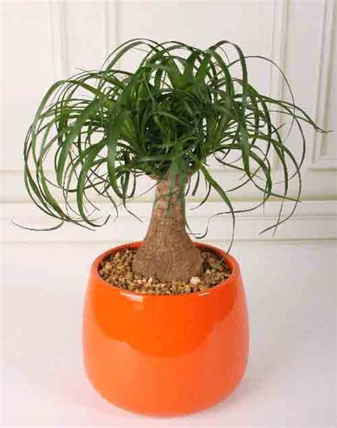 top houseplants for low medium and high light conditions best plants for indoors low light mcmurray