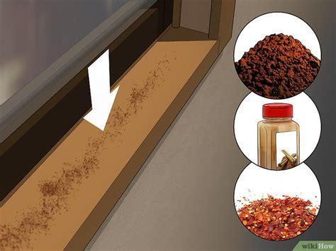 Minyak Kayu Putih Sulingan 3 cara untuk membasmi kecoak atau semut tanpa pestisida