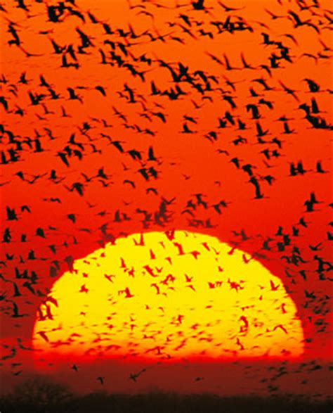 do birds migrate north to south of south to north