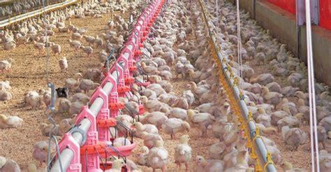 tips   chicken house heating  ventilation