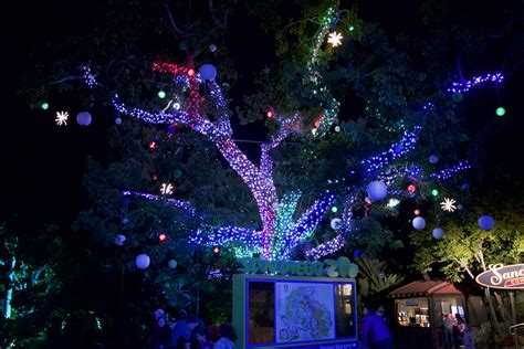 Zoo Lights San Diego Destinations San Diego Zoo Jungle Bells Terry Ambrose