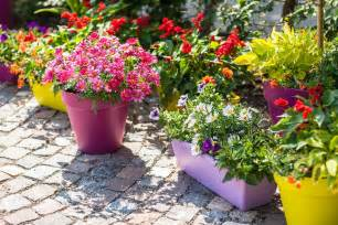 garden flower containers 5 perks of growing a container garden