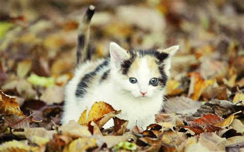 kitten background kitten wallpapers 68 images