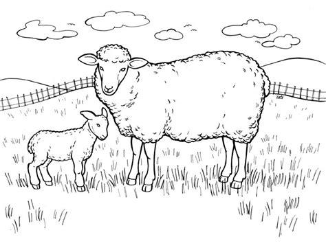 sheep pen coloring page planse de colorat cu oi miei