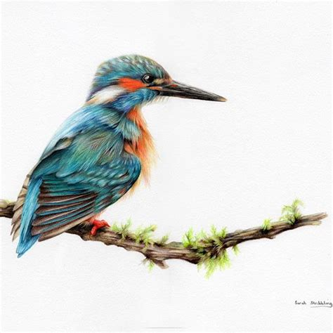 color drawings pinner said it s finished kingfisher colour pencil