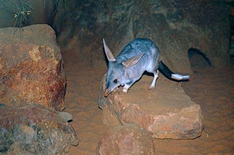 incredible australian animals  havent heard