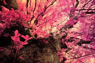 wallpaper pink leaves energy news mossy oak break up wallpaper picswallpaper com