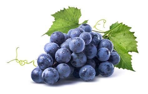 imagenes de uvas sin fondo 4 benef 237 cios sobre a uva que voc 234 provavelmente n 227 o