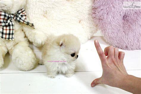 pomeranian breeders vancouver bc kijiji free dogs vancouver bc