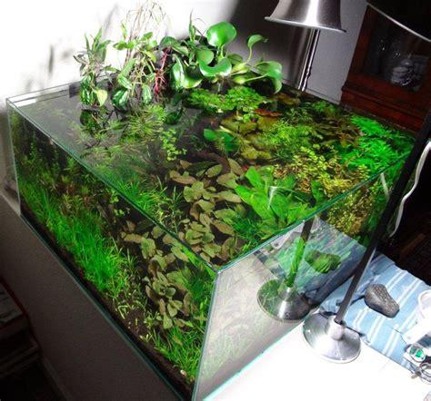 aquascape design australia 126 best planted tanks images on pinterest aquarium