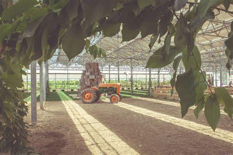 lade per piante da interno fattoria didattica la fragola de bosch