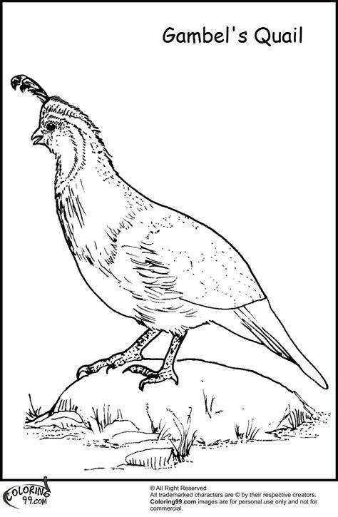 coloring pages quail quail coloring pages az coloring pages